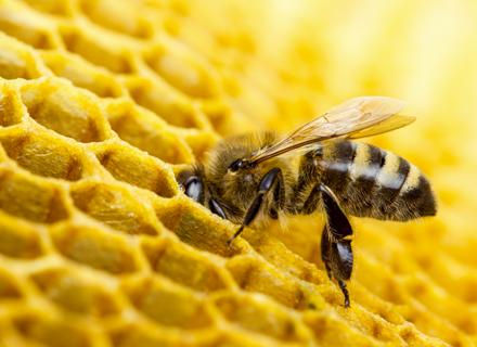 Signals protége les abeilles
