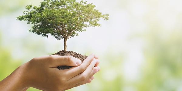 Signals et le développement durable